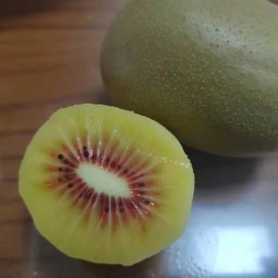 金太阳猕猴桃